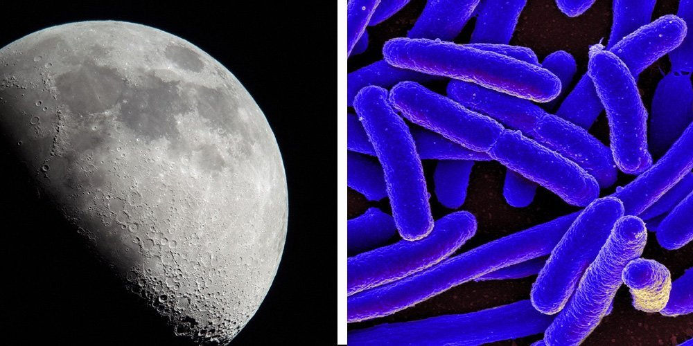 Moon and microorganism