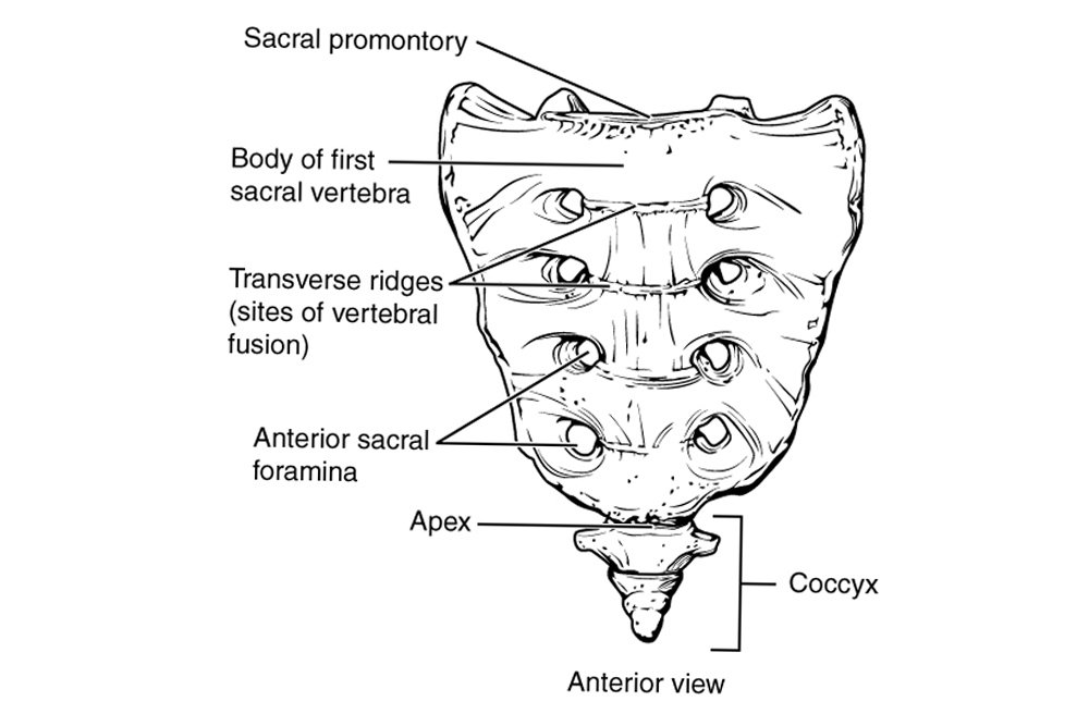 sacrococcygeal region