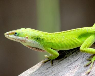 lizard green mammal nature animal cold blooded