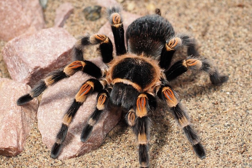 Why Are We Afraid Of Spiders Science Abc