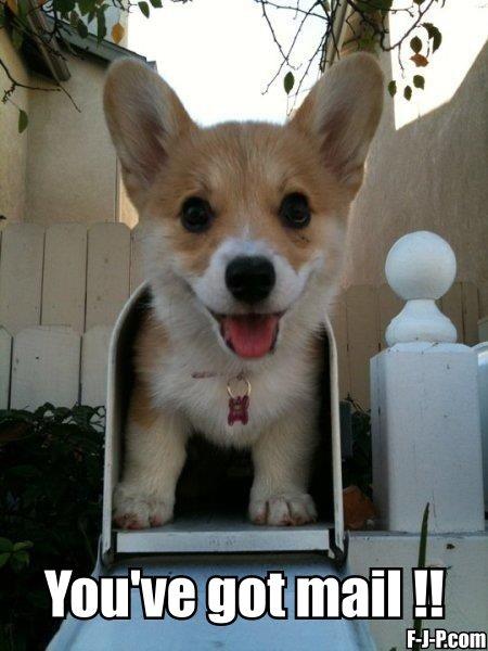 https://1.bp.blogspot.com/-KoIkP3w-Hdk/WQZMf9fVRsI/AAAAAAAAjzg/BwsMZG2IzSsQRbKq5JlKmA9iejCe7eYJwCLcB/s1600/youve-got-mail-dog.jpg