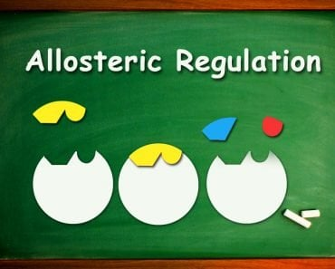 Allosteric Regulation..