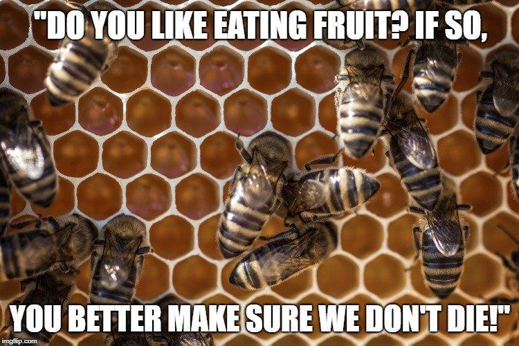 Do you like eating fruit