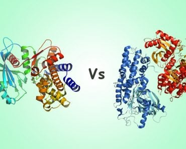 Glucokinase vs Hexokinase