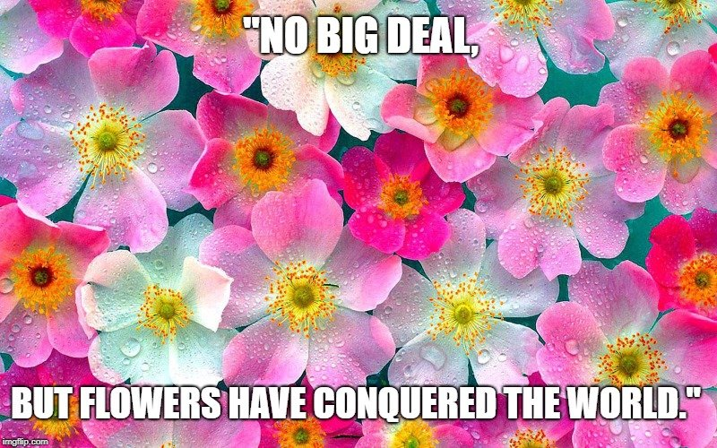 but flowers have conquered the world