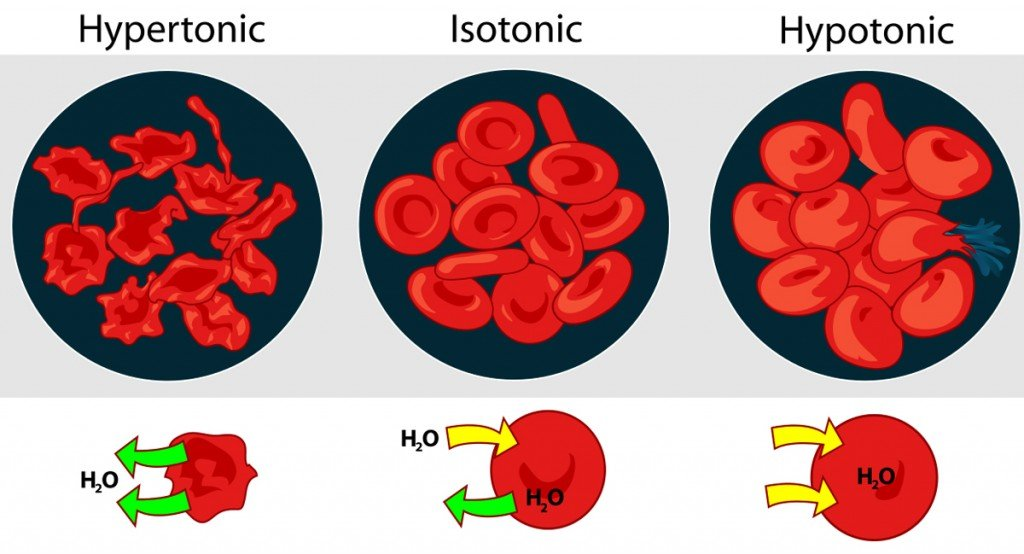 osmatic flow in cell