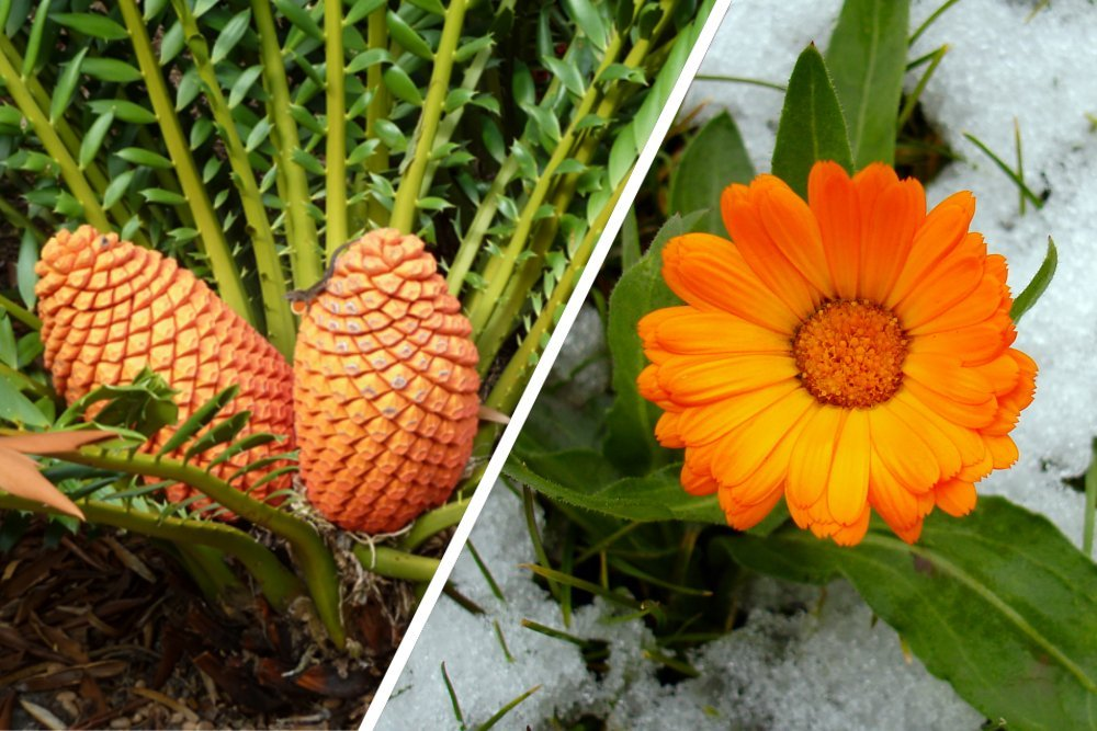 Angiosperms Vs Gymnosperms : How Are They Different?