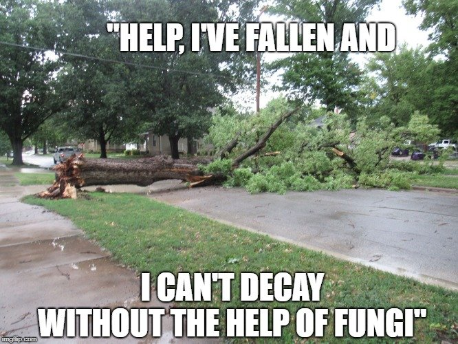 I can't decay without the help of fungi meme