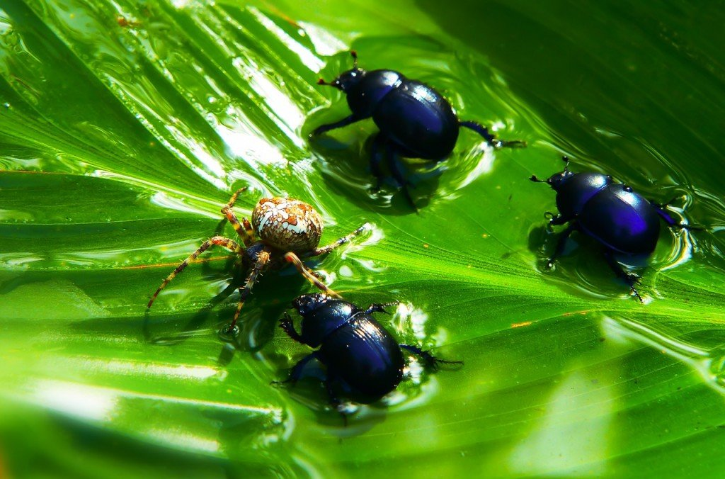 Insects Food Victim Arachnid Water Beetles Forest