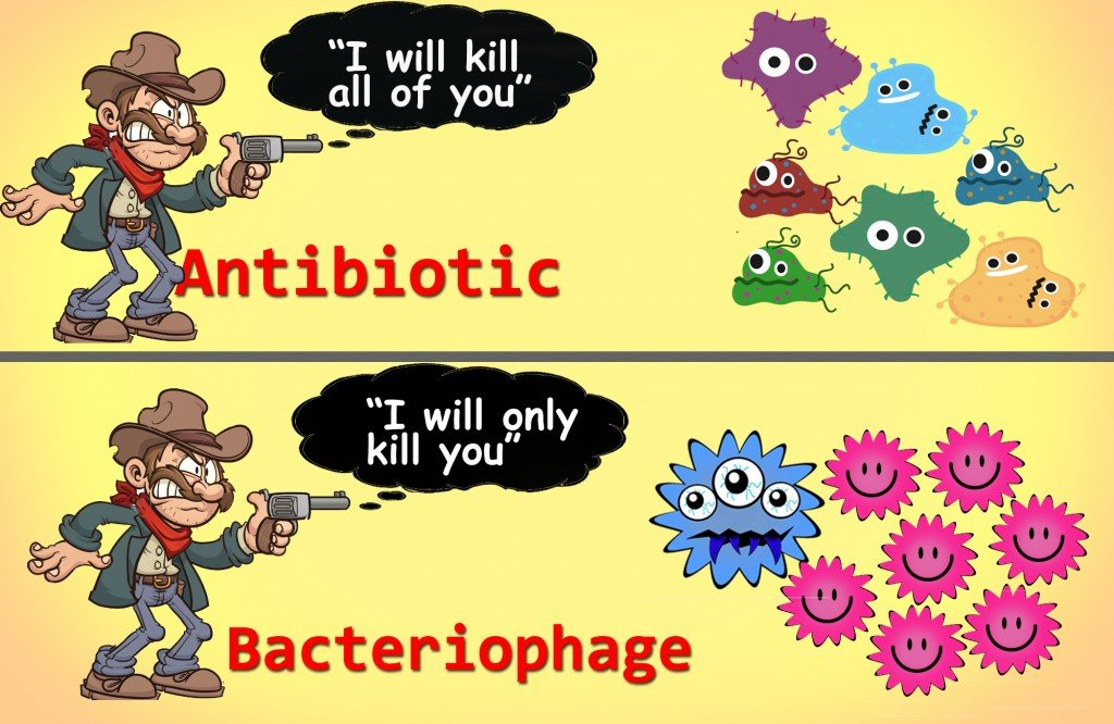bacteriophages, bacteria, virus