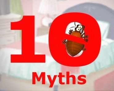 bed bugs myth