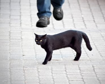 black bad cat