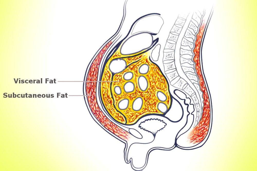 fat diagram