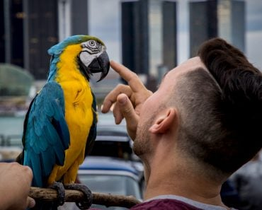 parrot talking with man