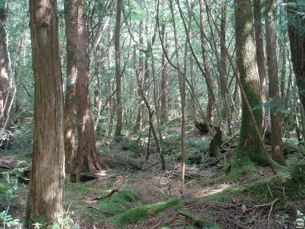 sea of trees