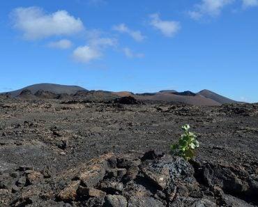 volcanic soil