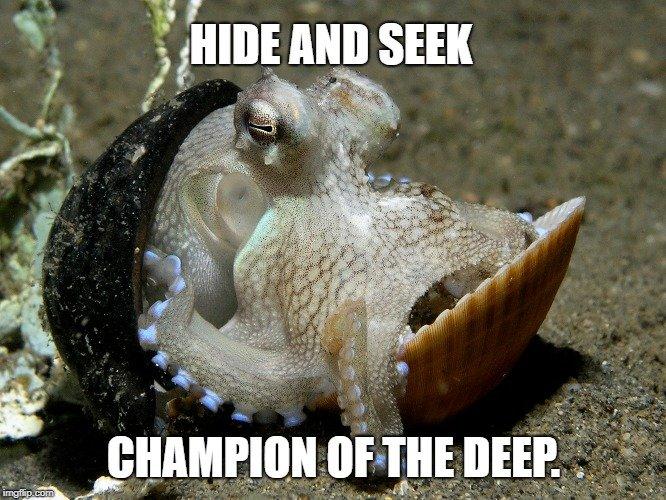 Hide and Seek meme
