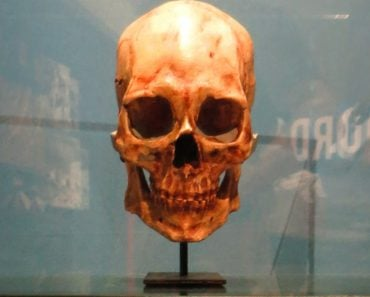 Kennewick man skull remains skeleton fossil