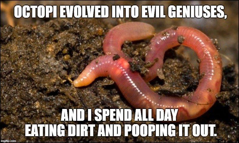 Octopi evolved into evil geniuses meme