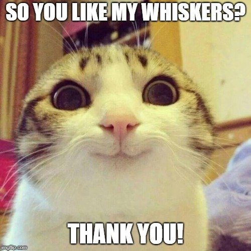 SO YOU LIKE MY WHISKERS THANK YOU meme