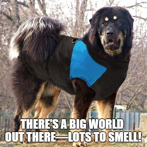 There's a big world out there—lots to smell! meme