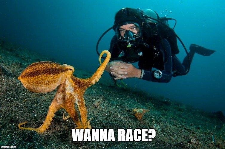 Wanna race meme