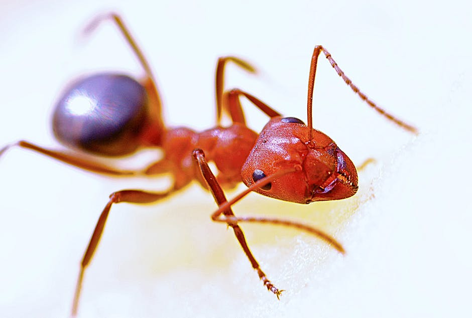 ant-macro-insect-red