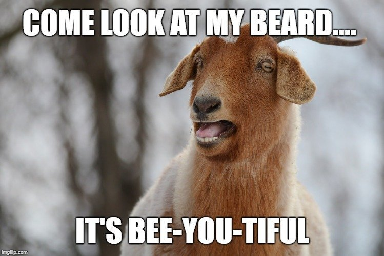 it's Bee-You-Tiful meme