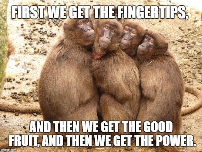 monkey group meme