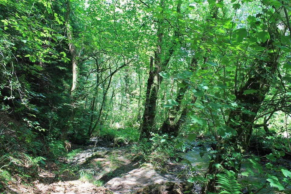 Autotrophs, tree ,forest