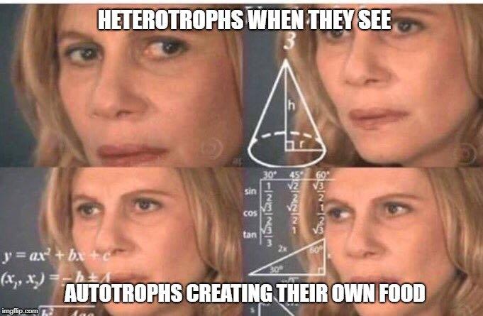 HETEROTROPHS WHEN THEY SEE; AUTOTROPHS CREATING THEIR OWN FOOD meme