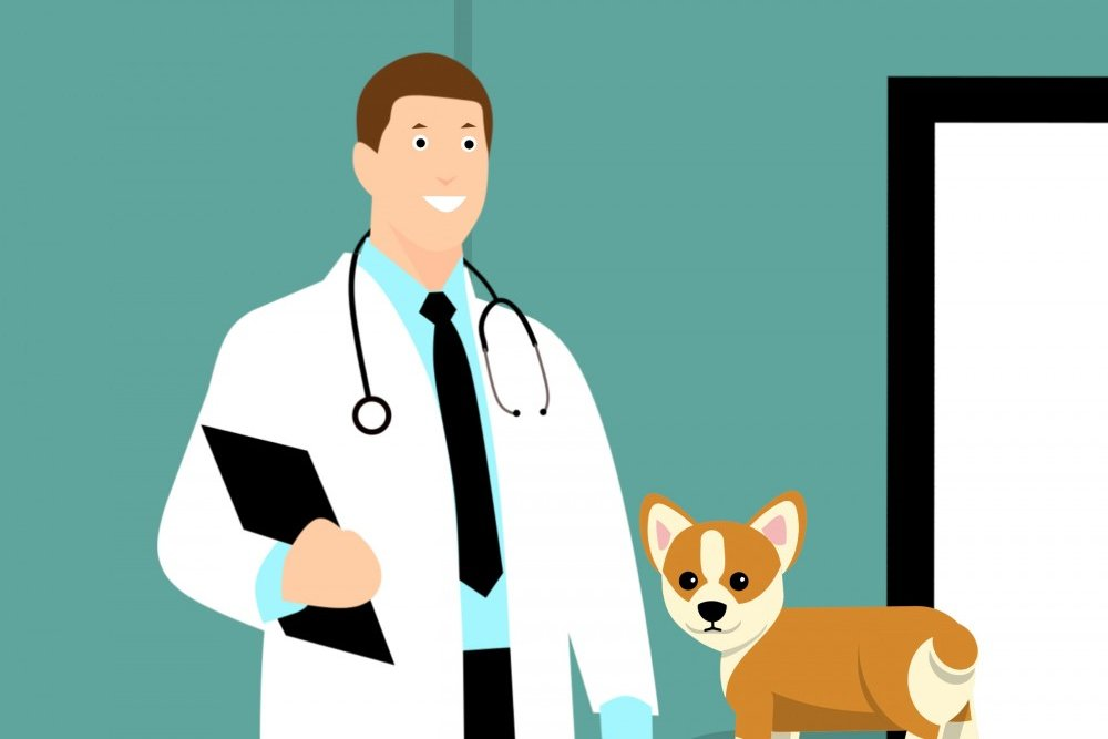 dog and doctor