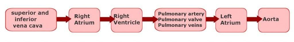 heart blood flow diagram