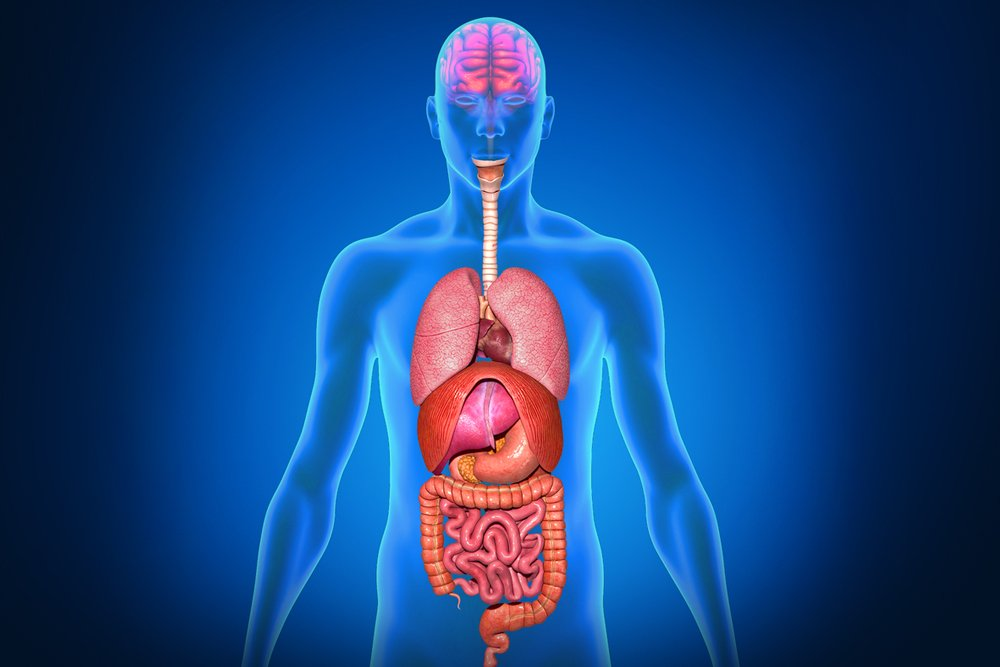 Why Are Some Internal Organs On One Side Rather Than The Other? | Muhabarishaji News