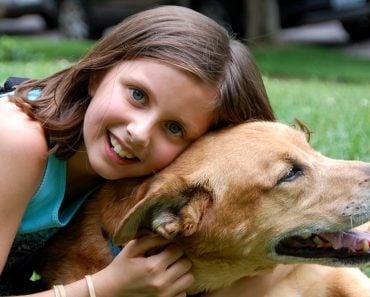 pet love, dog, puppy