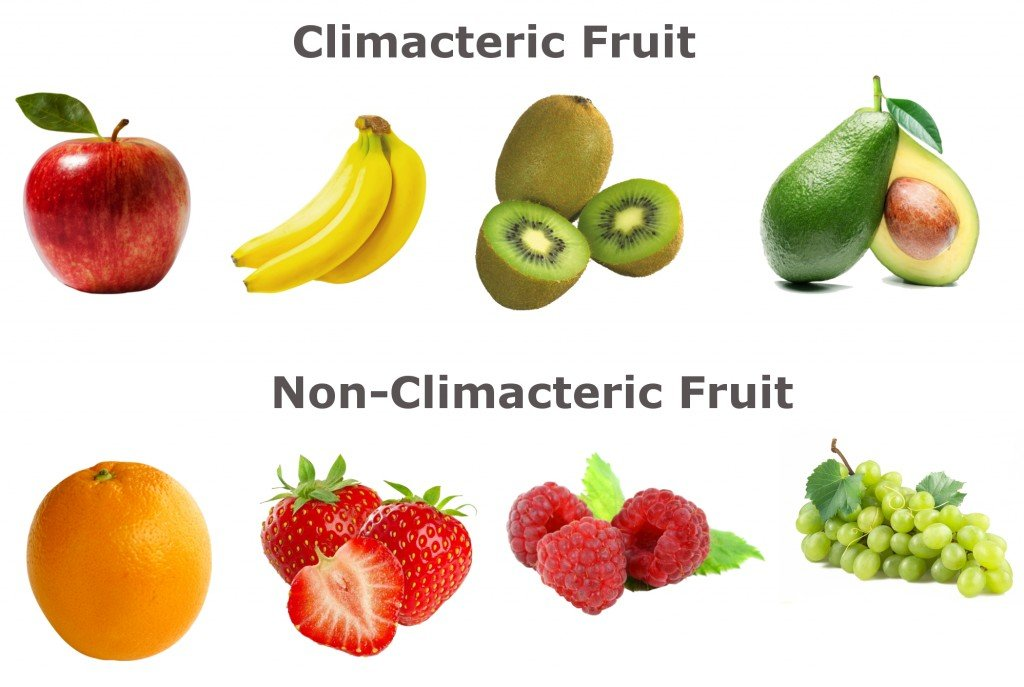 climacteric fruit and non climacteric fruit
