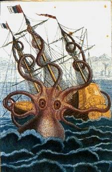 octopus, kraken