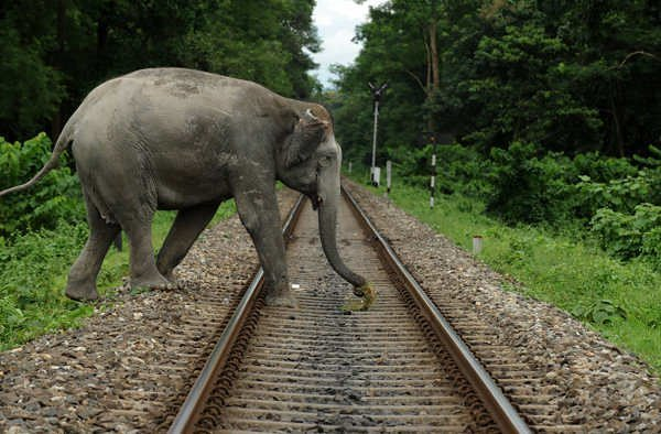 An elephant crosses a railway track whic