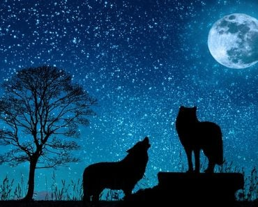 wolf, moon , night