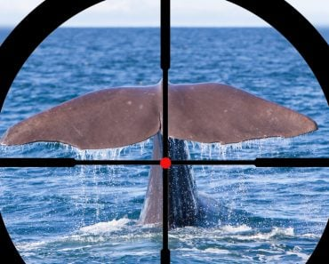 Hunting a Sperm Whale in the Atlantic ocean - Image(MyImages - Micha)S