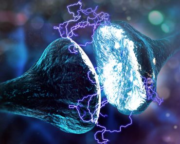 Synapse and Neuron cells sending electrical chemical signals (3D illustration) - Illustration( Andrii Vodolazhskyi)s