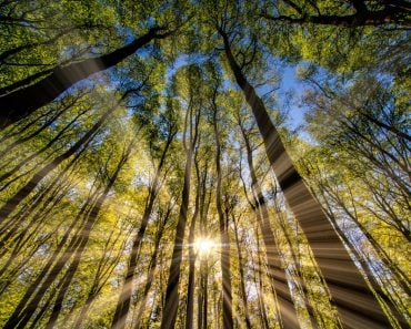 Tyndall Effect phenomena in a forest - Image(SUFIYAN8266)s