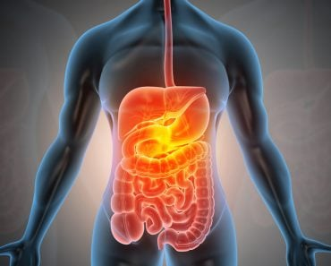 Anatomy of human body with digestive system. 3d illustration - Illustration(Explode)s