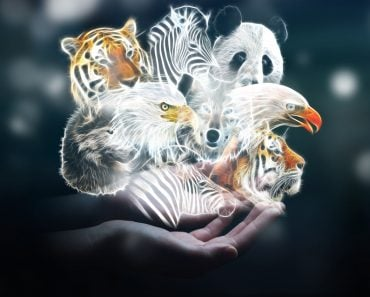 Person holding in his hand fractal endangered animal illustration 3D rendering - Image(sdecoret)s