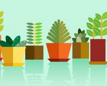 Plants - Vector(Dotx)S
