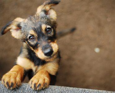 dog - Image( Monika Chodak)s