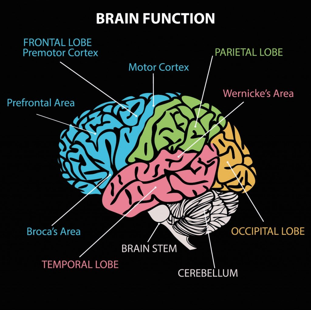 How Does The Brain Distinguish Languages In Bilingual ...