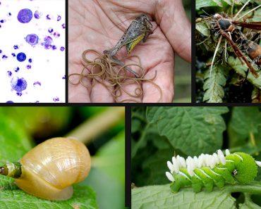 5 parasite