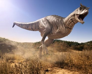 Carnotaurus charging through a field( Herschel Hoffmeyer)s