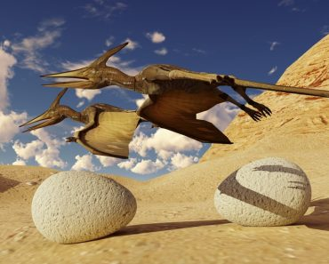 Egg and pterodactyl 3d rendering( Dariush M)s